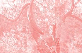 Imagens do Corpo Interior