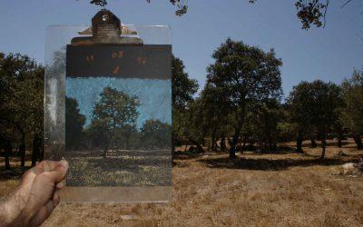 A pintura noterreno: um projeto de paisagem em pintura efotografia // João Paulo Queirós